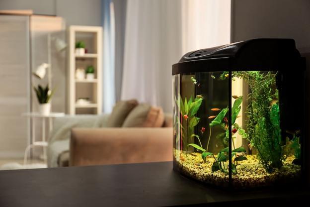 Quel éclairage choisir pour son aquarium ?